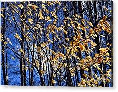 Late Fall Acrylic Print by Elena Elisseeva