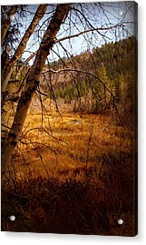 Late Fall Acrylic Print by Jerry Cahill