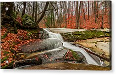 Acrylic Print featuring the photograph Late Fall On The Forest Floor by Jeremy Farnsworth