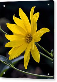 Late Summer Beauty Acrylic Print by Michael Friedman