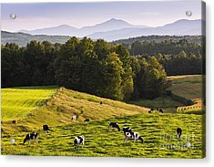 Late Summer Countryside Acrylic Print by Alan L Graham