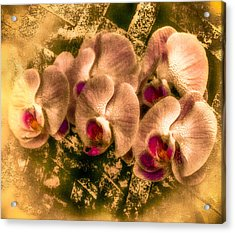 Late Summer Orchids Acrylic Print by Jill Balsam