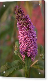 Late Summer Wildflowers Acrylic Print by Miguel Winterpacht