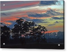 Acrylic Print featuring the photograph Late Sunset Trees In The Mist by Bill Swartwout