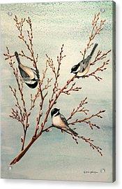 Late Winter Chickadees Acrylic Print by Gina Gahagan