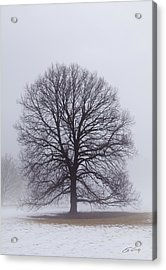 Late Winter Fog Acrylic Print