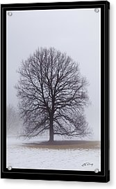 Late Winter Fog   Framed Acrylic Print