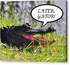 Later Gator Greeting Card Acrylic Print by Al Powell Photography USA