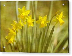 Laughing Dafs Acrylic Print by Rebecca Cozart