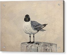 Acrylic Print featuring the painting Laughing Gull by Stan Tenney
