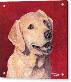 Laughing Labrador Acrylic Print