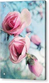 Acrylic Print featuring the photograph Laura Ashley Inspired Springtime Magnolias On Blue Sky by Lisa Knechtel