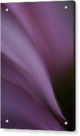 Lavander Slide Acrylic Print