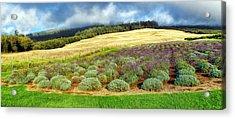 Lavendar 5 Acrylic Print by Dawn Eshelman