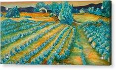 Lavendar Fields Acrylic Print by Bianca Romani