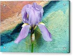 Lavendar Iris Acrylic Print by Marsha Heiken