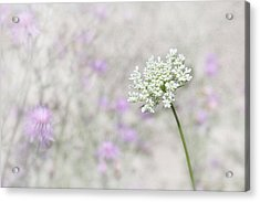 Lavender And Lace Acrylic Print by Lori Deiter