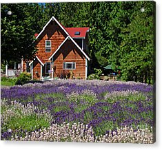Lavender Cottage Acrylic Print by Chuck Flewelling