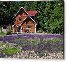 Lavender Cottage Acrylic Print