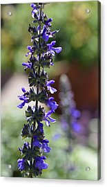 Lavender Dance - Floral Photography By Sharon Cummings Acrylic Print by Sharon Cummings