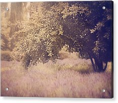 Lavender Dreams Acrylic Print by Amy Weiss