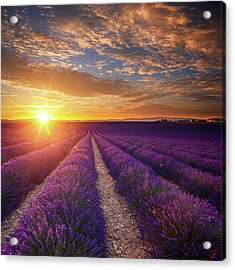Lavender Field At Sunset Acrylic Print by Mammuth