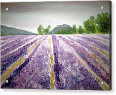 Lavender Fields Tasmania Acrylic Print by Elvira Ingram