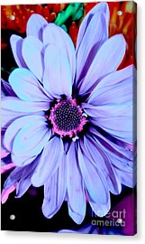 Lavender Flower Acrylic Print by LLaura Burge
