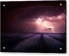 Lavender Fragrance Acrylic Print by Franz Schumacher