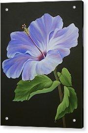 Lavender Hibiscus Acrylic Print