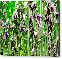Lavender In Summer Acrylic Print by Patrick J Murphy