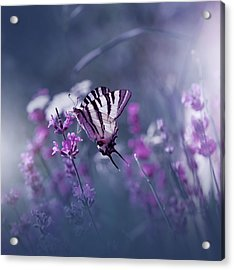 Lavender Queen... Acrylic Print by Juliana Nan