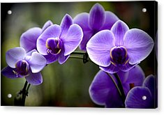 Lavender Rainbow Acrylic Print by Karen Wiles
