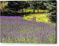 Lavender Rest Acrylic Print