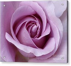 Lavender Rose Blossom 1 Acrylic Print