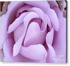 Lavender Rose Blossom 2 Acrylic Print
