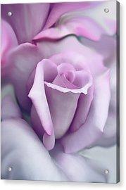 Lavender Rose Flower Portrait Acrylic Print