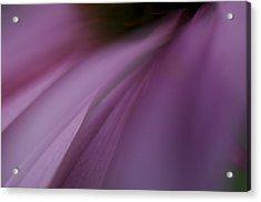Lavender Slide 2 Acrylic Print