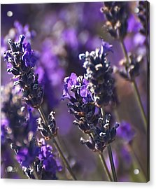 Acrylic Print featuring the digital art Lavender Stems by Kari Nanstad