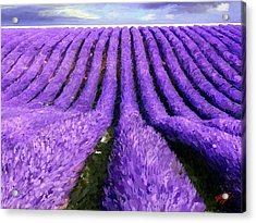 Lavender Straight Acrylic Print by James Shepherd