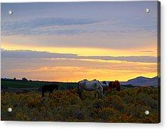 Acrylic Print featuring the photograph Lavender Sunrise by Lynn Hopwood