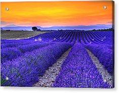 Lavender's Sunset Acrylic Print by Midori Chan