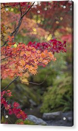 Layers Of Autumn Red Acrylic Print by Mike Reid