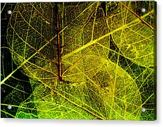 Layers Of Leaves Acrylic Print by Bonnie Bruno