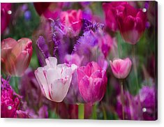 Layers Of Tulips Acrylic Print