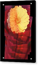 Layers Of Yellow Flower Acrylic Print by Susan Stone