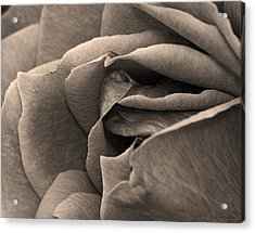 Layers Unfurled  Acrylic Print by Robert Culver
