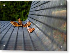 Lazing In The Sun Acrylic Print by Andreas Levi