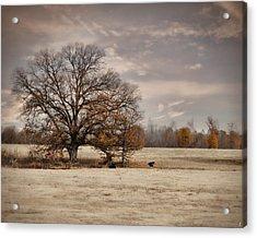 Lazy Autumn Day - Farm Landscape Acrylic Print by Jai Johnson