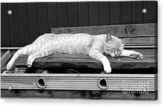Acrylic Print featuring the photograph Lazy Cat by Andrea Anderegg
